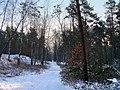 Winter im Teutoburger Wald07.jpg
