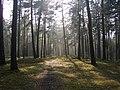 Wood - panoramio.jpg