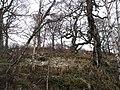Woodland, Braes of Nuide - geograph.org.uk - 680910.jpg