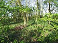 Woodland - geograph.org.uk - 165821.jpg