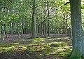 Woodland at Sollom - geograph.org.uk - 1281310.jpg