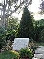 Yew Tree (Taxus Baccata), Jardins Saint-Martin, Monaco - panoramio.jpg