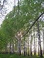 Yoshkar-Ola, Mari El Republic, Russia - panoramio (317).jpg