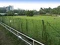 Yu Tai Court proposed site.jpg