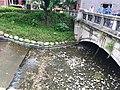 Zhongshan-green-bridge-祝萍-4.jpg