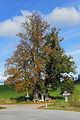 Zwei Linden an der L8280 Altweitra 2014-10 NÖ-Naturdenkmal GD-078.jpg