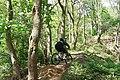 'Fly Past' in Hagg Stones Quarry, Oughtibridge - geograph.org.uk - 1281871.jpg