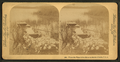 'Where the water lillies bloom in March.' - Florida, from Robert N. Dennis collection of stereoscopic views 2.png