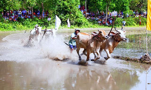 Tân An và Long An là កំពង់គោ bến sông có nhiều bò hoặc chợ buôn bán bò