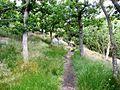 Ścieżka na skraju urwiska - panoramio.jpg