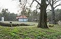 Два заповідних дерева навколо садиби-музея М.Шашкевича. Третій дуб -нещодавно впав.jpg