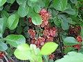 Донецкий ботанический сад 020.jpg