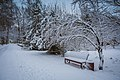 Засніжена зима в парку.jpg
