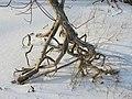 Лесовик. Берег Волги. База отдыха Ладья. Самара. Январь 2011 - panoramio.jpg