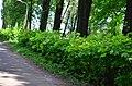 Наводницкий парк в Киеве. Фото 6.jpg