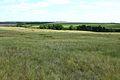 Овраг Березовый - panoramio.jpg