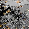 Осенние листья на зеркале времени.jpg
