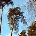Особо охраняемая природная территория местного значения «Черняевский лесопарк», Пермь - panoramio (27).jpg