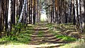 По этой просеке мы в детстве ходили на Козловку - panoramio.jpg