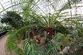 """Растения """"Тропики"""".jpg"""
