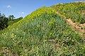 Растительность на пронском городище.JPG