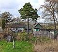 Сосёнка в огороде - panoramio.jpg