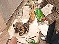 Украина (Україна), обл.Одесская (обл.Одеська), Одесса (Одеса), р-н Приморский, ул.Лейтенанта Шмидта,25, кошки, 10-13 04.11.2008 - panoramio.jpg