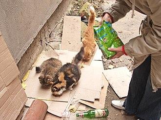 Semi-feral - Stray cats in Odessa
