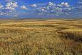 Урочище Утиная гора 3 - panoramio.jpg
