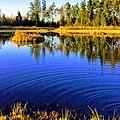 بحيرة جميلة في Älmhult.jpg