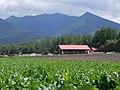 ひつじの丘 - panoramio.jpg