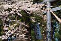 伊佐沢神社 Isazawa Shrine - panoramio.jpg