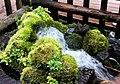 名水公園 Fukidashi Park - panoramio.jpg