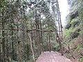 大神仙居风景区的藤绕树 - panoramio (2).jpg