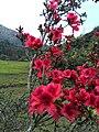 新丰司茅坪林场20150412 - panoramio (97).jpg