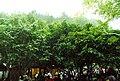 桂林市古东瀑布群景区景色 - panoramio (9).jpg