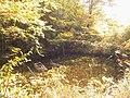 河童が棲んでそうな池 - panoramio.jpg