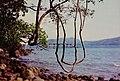芭東海岸 Padong Coast - panoramio.jpg