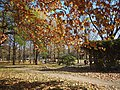 陶然亭之秋 - Autumn in Taoranting Park - 2011.11 - panoramio.jpg