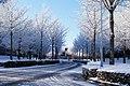 雪のイチョウ並木 - panoramio.jpg