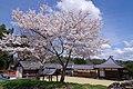 龍智神社と龍智院 五條市住川町 Ryūchi-jinja and Ryūchi-in temple 2014.4.03 - panoramio.jpg