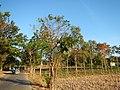 0581jfLandscapes Mabalas Diliman Salapungan Paddy fields San Rafael Bulacan Roadsfvf 01.JPG