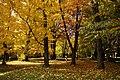 131103 Hokkaido University Botanical Gardens Sapporo Hokkaido Japan11s5.jpg