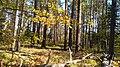 15 Брянский лес Номинация Природа Котова Мариша.jpg