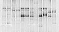 16S PCR DGGE.jpg