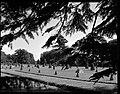 17.06.1964. Vue de la propriété. (1964) - 53Fi4695.jpg