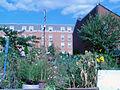 2005 community garden Pittsburgh 40955850.jpg