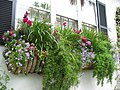 2006 windowbox Charleston SouthCarolina 143095824.jpg