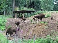 2010 Wildparkhundshaupten 2.JPG