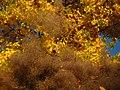 2011-10-31-155124 .JPG - panoramio.jpg
